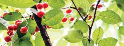blaadjes groen rood 55 min - Home