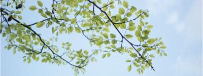 blaadjes mindfulness min - Home