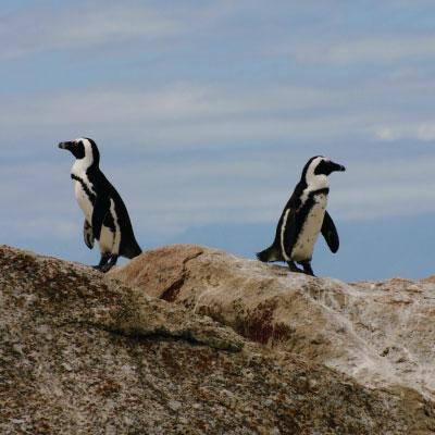 pinguins relatie 2 - Agenda