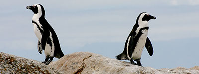relatie pinguins 1 - MINDFULNESS, THERAPIE & STRESSMANAGEMENT