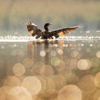 vogel bruin vierkant 400 min - Mindfulness en ACT