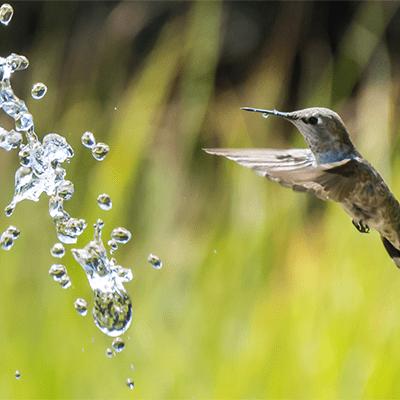 stress less kolibri1 min - Agenda