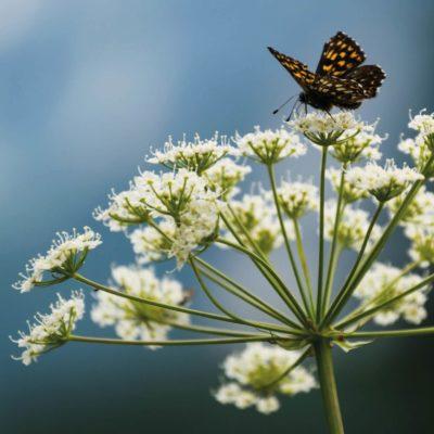 koelte en rust 3 e1626718134202 - Trauma Sensitieve Mindfulness
